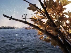 Bostancı Denizotobusu [Kadıköy, Türkei ]